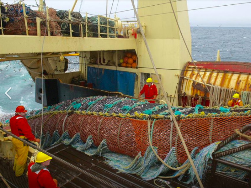 Alaska Pollock Producers Hands Ketchum Global PR Assignment