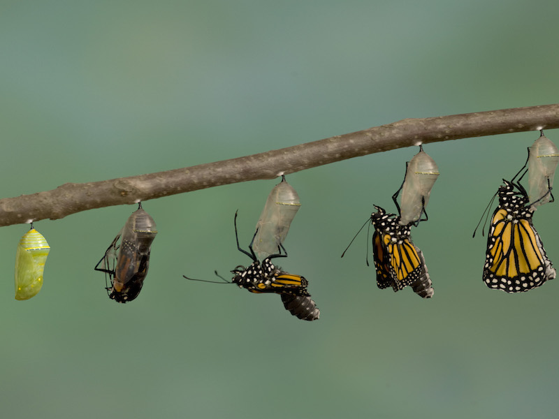 Transformation Lessons From The Corporate Frontline
