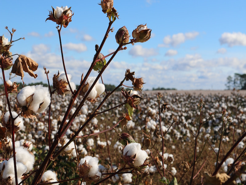US Cotton Group Hands Global Comms Duties To H+K Strategies